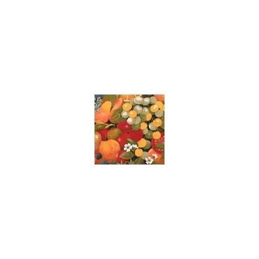 Nappe Zuccherro coton 2m50/1m60